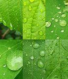Spring rain royalty free stock image