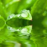 Rain Drops on Green Plant Royalty Free Stock Image