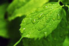 Rain drops on leaf Stock Image