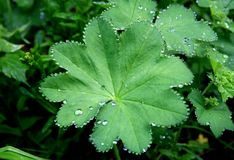 Rain drops on leaf Stock Photo