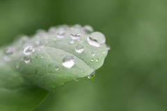 Rain drops on leaf. Rain drops on the green leaf,macro Stock Photo