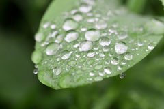 Rain drops on leaf Stock Photos