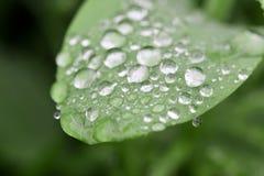 Rain drops on leaf. Sparkling rain drops on the green leaf,macro Stock Photos