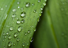 Rain drops on a leaf. Stock Photos