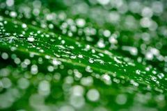 Rain Drops Royalty Free Stock Photos