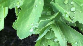 Rain drops. On leaf Royalty Free Stock Photos