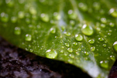 Rain drops on leaf. Close up of rain drops on green leaf royalty free stock images