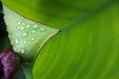 Rain drops on the leaf. Rain drops on the leaf nature background Royalty Free Stock Photos