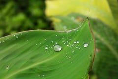 Rain drops on the leaf. Rain drops on the leaf nature background Royalty Free Stock Image