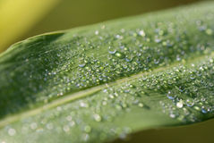 Rain drops on leaf. Photo of rain drops falling from a leaf Royalty Free Stock Image