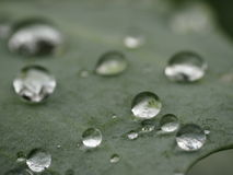 Rain drops on a leaf Royalty Free Stock Photo