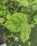 Rain drops on leaf royalty free stock photo