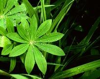 Rain drops on a leafs Royalty Free Stock Photos