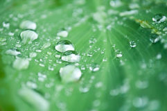 Rain drops on leaves Stock Photography