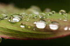 Rain drops. On leaves  fresh green Royalty Free Stock Photos