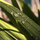 Rain drops on leaves. The morning rain left some tracks Royalty Free Stock Photography