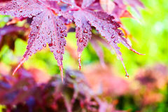 Rain drops on leaves after rain. Rain drops on leaves on daylight Stock Image