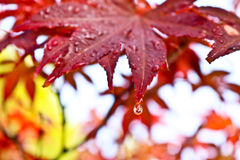 Rain drops on leaves after rain Royalty Free Stock Photos