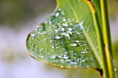 Rain drops on leaves after rain Stock Images