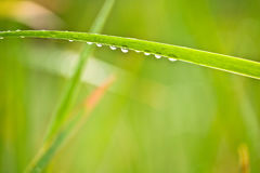 Rain drops on leaves after rain. Rain drops on leaves on daylight Royalty Free Stock Image