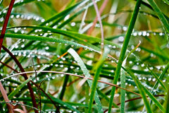 Rain drops on leaves after rain Stock Photography
