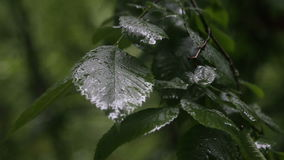 Rain drops on leaves of trees. Summer, rain in the city, spray of rain on the leaves of trees stock video
