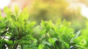 Rain drops in lights on green leaf stock footage