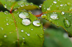 Rain drops macro nature leaf green Royalty Free Stock Photos