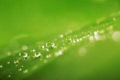 Rain drops over fresh green leaf texture, natural background Royalty Free Stock Images