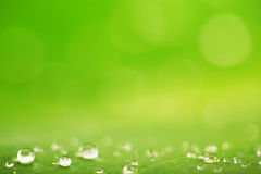Rain drops over fresh green leaf texture, natural background Royalty Free Stock Photography