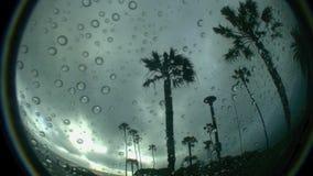 Rain Drops and Palms 1 SWAMIS Beach Encinitas California. Rain Drops and Palms 1 SWAMIS Beach Encinitas North County San Diego Californian stock video footage