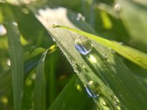 Rain drops. Photo of grass after rain with drops and sunlight Stock Photography