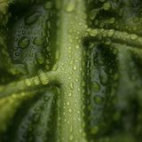 Rain drops on plant leaf Royalty Free Stock Photos