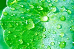 Rain drops on plant leaf Royalty Free Stock Images