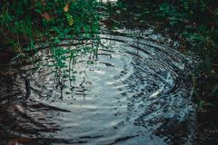 Rain drops rippling. In a puddle royalty free stock photos