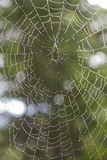 Rain drops in spider web Royalty Free Stock Photography