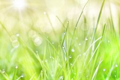 Rain drops and sunshine. This is a picture of grass after rain. Picture is taken with sony camera in my garden Stock Image
