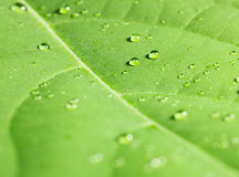 Rain drops on tree leaf Stock Images