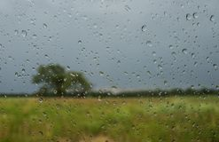 Through the Rain Drops. A tree and open field viewed through a rain covered glass Stock Photography
