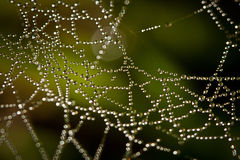 Rain drops web. A spider web covered by raindrops Royalty Free Stock Image