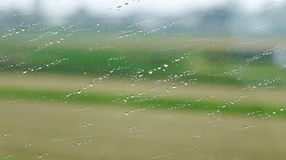 Rain drops on wet window glass. With nature background Royalty Free Stock Photography