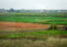 Rain drops on wet window glass. With nature background Royalty Free Stock Image