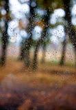 Rain drops on window. Rain drops on a window in autumn Royalty Free Stock Photos