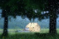 Rain drops on window glass Royalty Free Stock Image