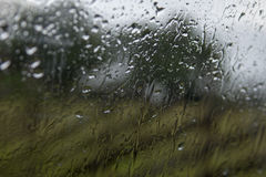 Rain drops on window with green tree in background Stock Image