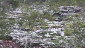 Rain in a dry rock riverbed, in an area of world heritage listed `dry rainforest` ecology. This region of Australia, sustains an indigenous ecology named `dry stock video footage