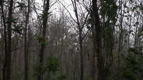 Rain fall in the forest. Slow Motion footage of Rain fall in the forest of Thailand in rainy season stock video footage