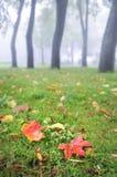 Rain in the fall park Royalty Free Stock Photo