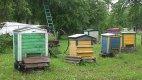 Rain falling on beehives stock footage