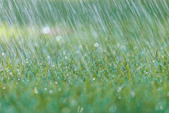 Rain is falling on fresh green grass Royalty Free Stock Images